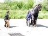 les-goulus-momo-the-kid-juillet-2009-2